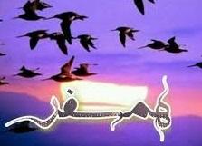 ما دوتا پرنده عشق و دوتا همسفریم